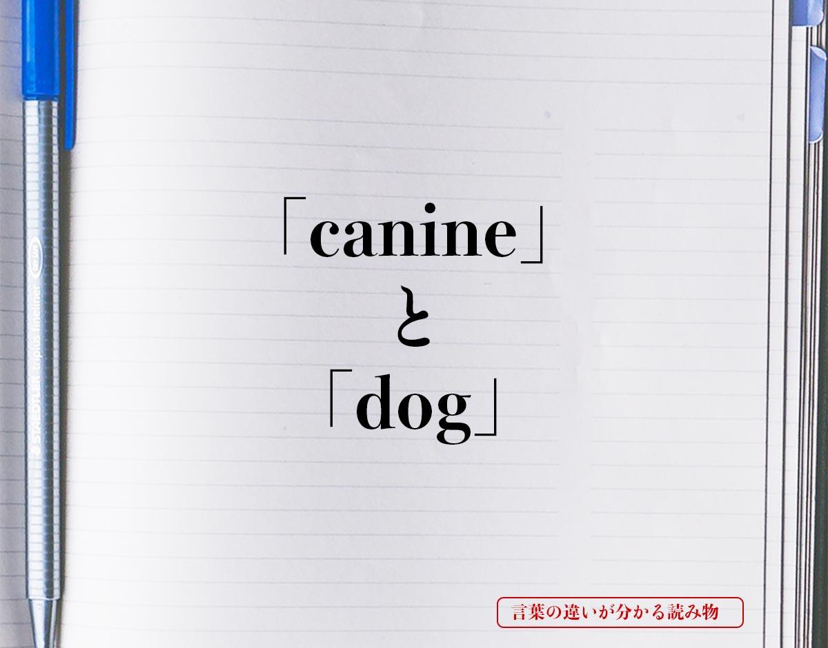 「canine」と「dog」の違い